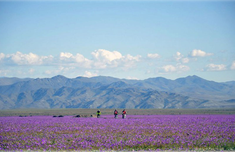 flores-deserto-close-3