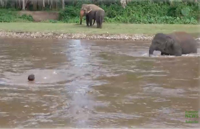 Foto: reprodução / Save Elephant Foundation
