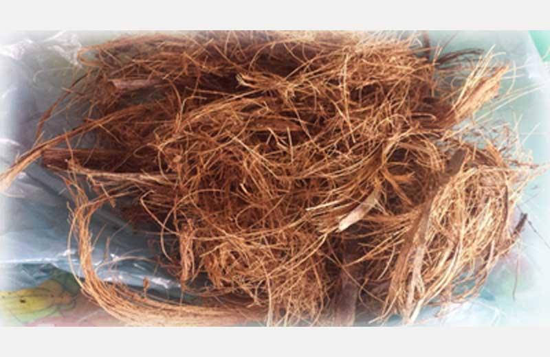 Fibras de coco - Foto: divulgação