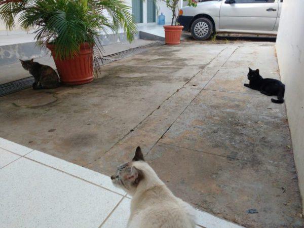 delegacia-gatos-10