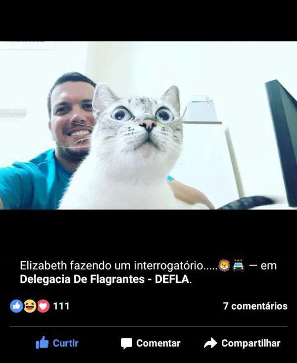 gatos-delegacia-2