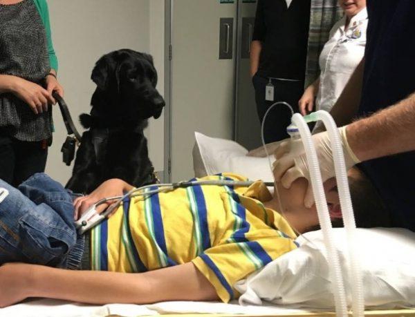 Foto: Reprodução / Facebook / Assistance Dogs New Zealand