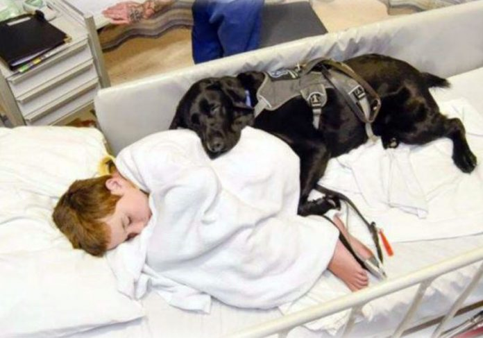 Foto: Reprodução / Facebook / Assistance Dogs New Zealand|