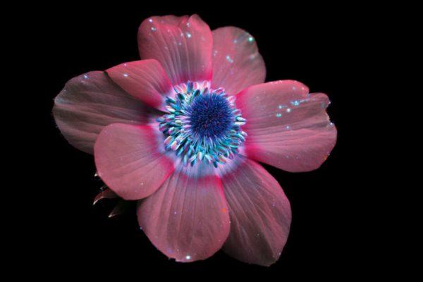 flores-0