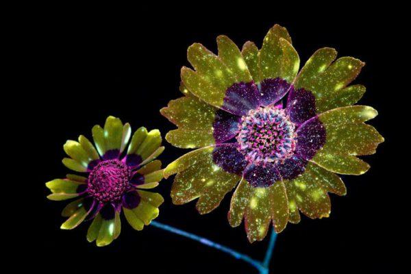 flores-cores-2