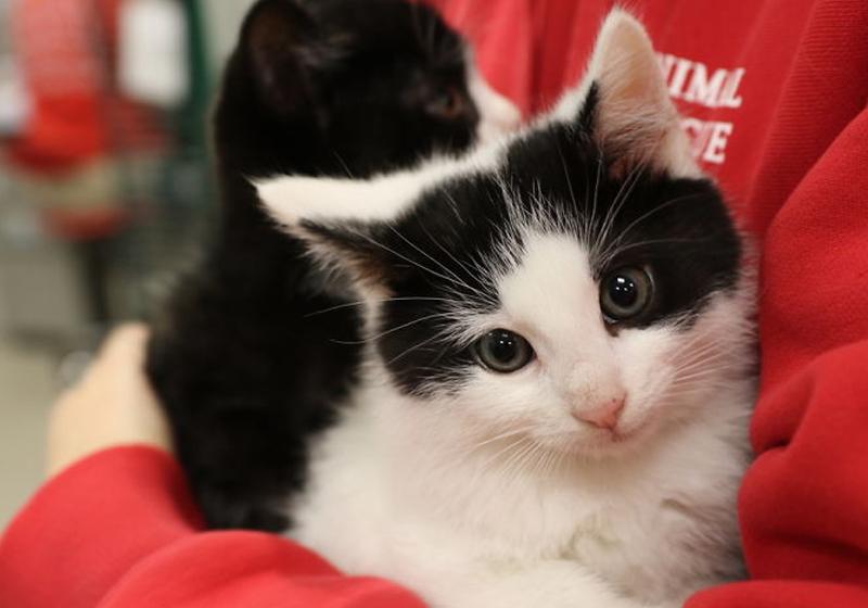Foto: Animal Rescue League Of Boston