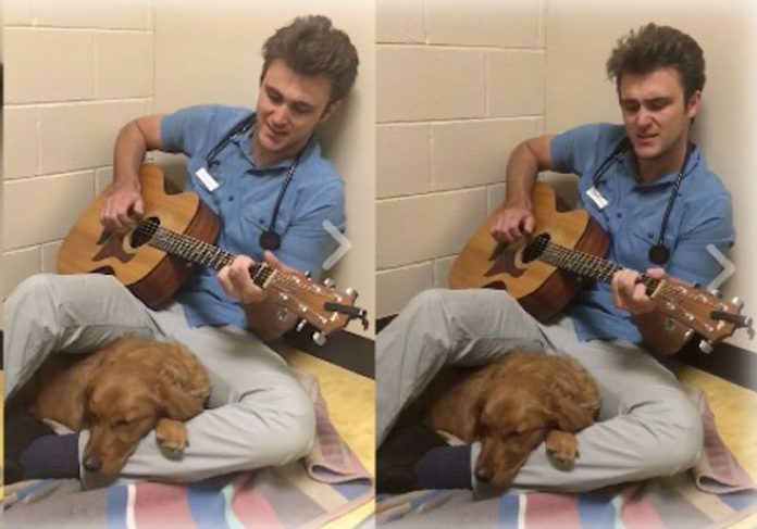 Foto: Fox Hollow Animal Hospital / Youtube