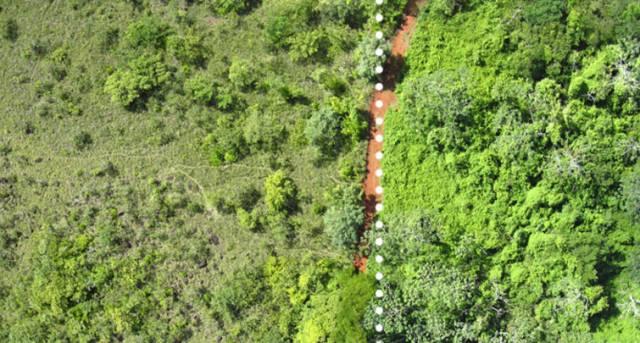 Área fertilizada com cascas de laranja (dir) Foto: Tim Treuer