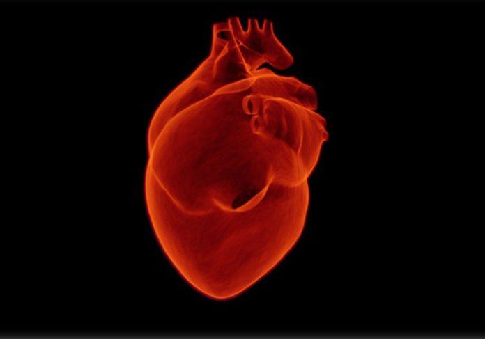 Coração humano - Foto: Pixabay