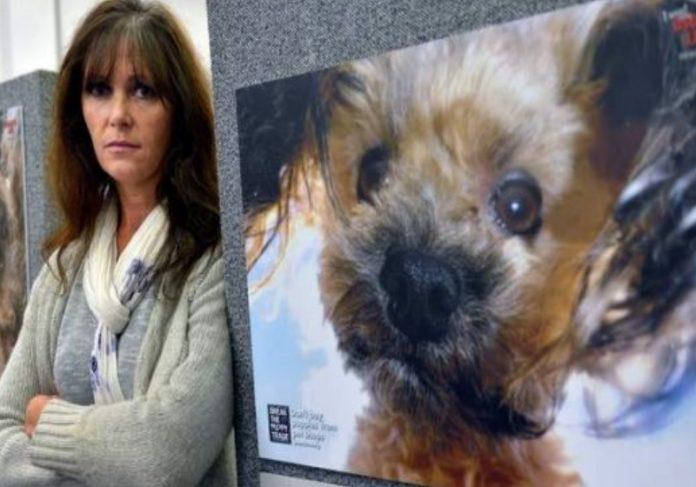 A ativista Debra Tranter e o cãozinho Oscar Foto: The Sydney Morning Herald