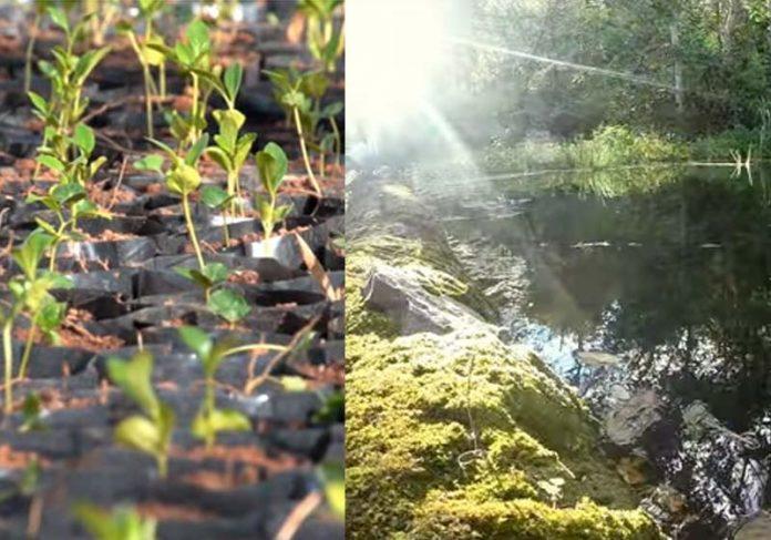 Foto: reprodução / Momento Ambiental