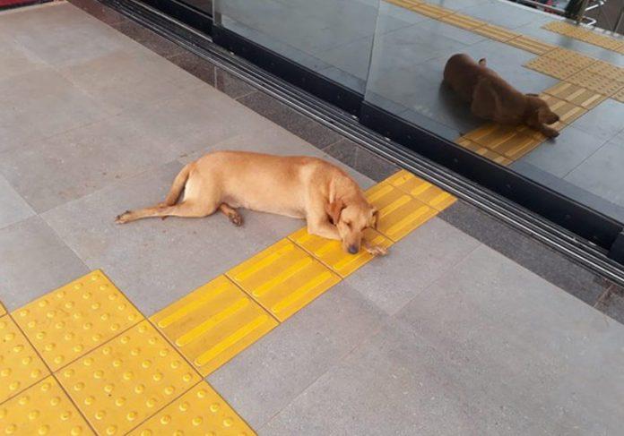 Rex aguardando a tutura - Foto: Foto: Magda Oliveira/G1|