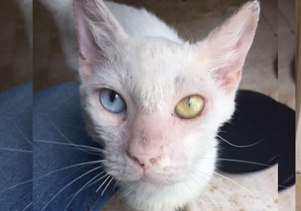 gato_muda4