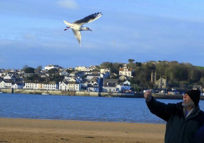 Sumner e a gaivota - Fotos: SWNS  