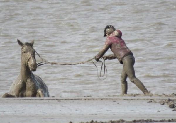 cavalo_resgate3