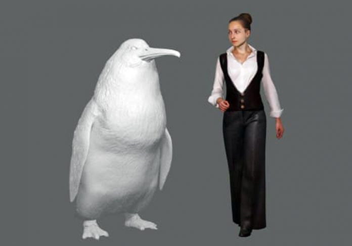 Comparação do pinguim gigante com uma mulher - Foto: Foto: Canterbury Museum 