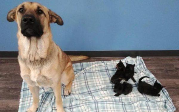 Foto: reprodução / Facebook Pet and Wildlife Rescue