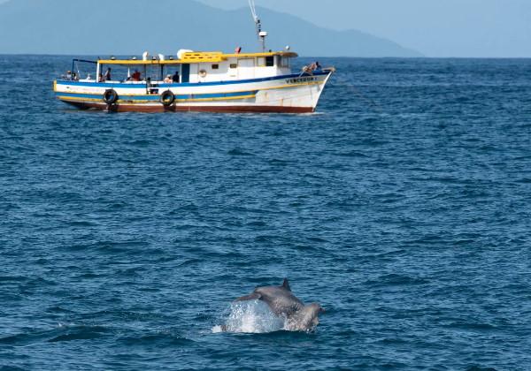 golfinhos2
