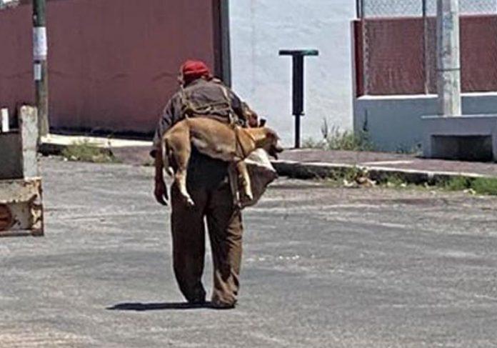 Idoso carregando cão nas costas - Foto: reprodução / Facebook