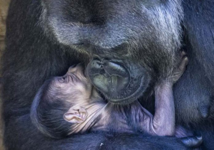 Foto: Bristol Zoo