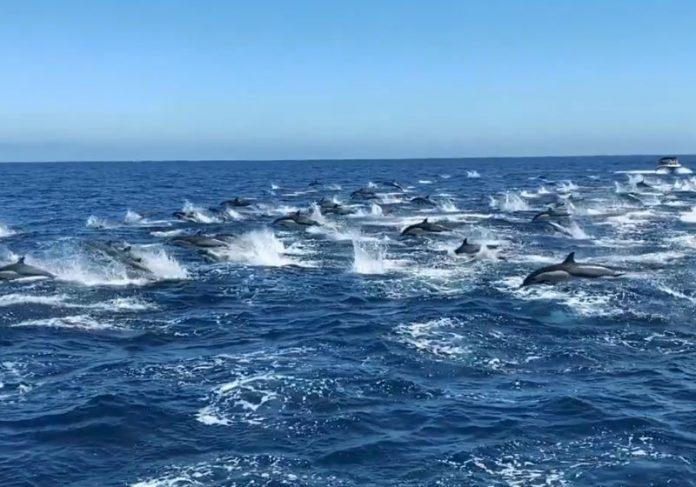 Foto: Capt. Dave's Dana Point Dolphin & Whale Watching Safari