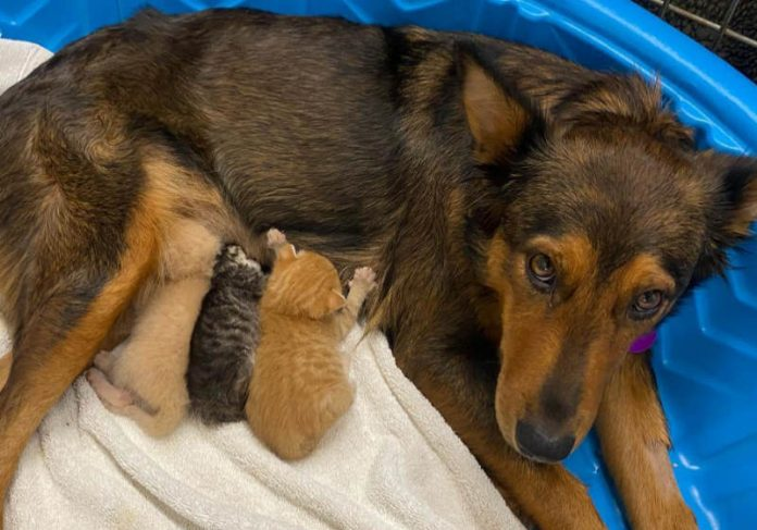 Foto: Sunshine Dog Rescue