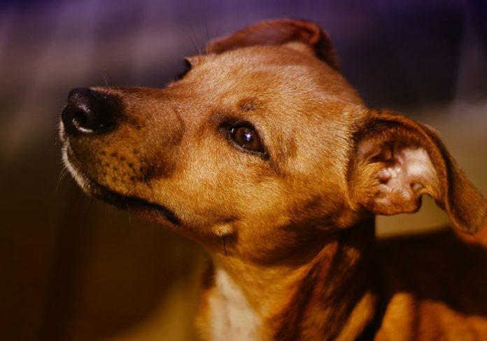 Cachorro - Foto: Pixabay / S. Hermann & F. Richter