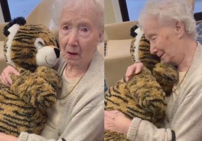O tigre e a vovó - Fotos: Beka Fitz/TikTok
