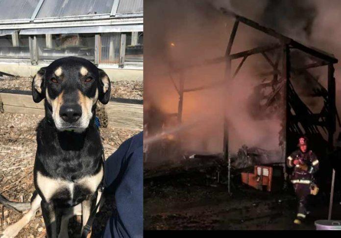Eddie, a heroína que avisou sobre o incêndio - Fotos: reprodução / Twitter e CBSBoston