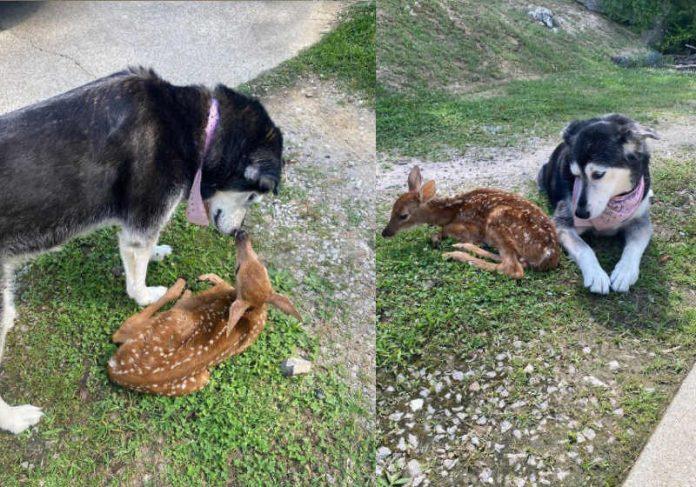 Zoey, a cadela de Pollifrone, não arredou pé até que o bambi ficasse melhor - Foto: reprodução Instagram