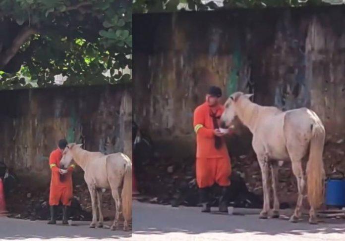 O gari parou o serviço dele quando viu o cavalo passando mal de sede e levou água - Foto: reprodução / Instagram