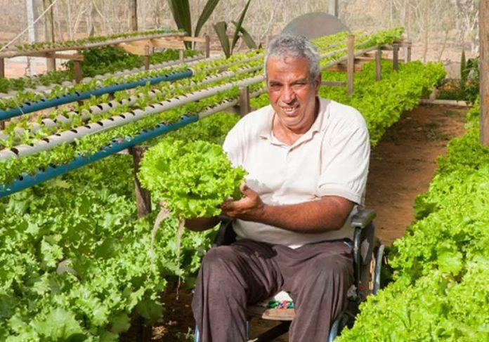 Agricultor cadeirante é referência em Goiás com cultivo de alface sem uso do solo - Foto: arquivo pessoal