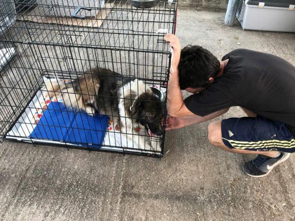Voluntário com cachorro ferido resgatado - Foto: AFP