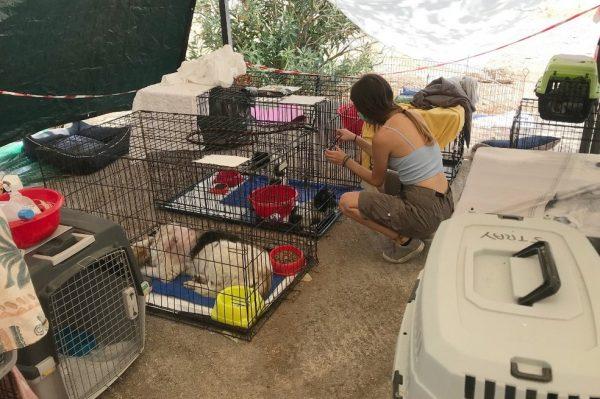 Voluntária cuida dos animais resgatados na Grécia - Foto: AFP