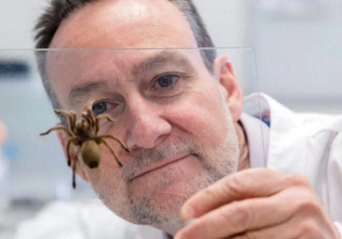 Veneno de uma das aranhas mais perigosas do mundo pode salvar vidas, diz pesquisa - Foto: Victor Chang Institute