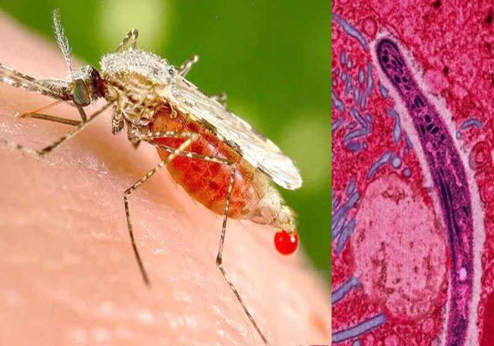 O remédio anticâncer mostrou eficácia de 100% contra malária após 3 dias de uso - Foto: reprodução
