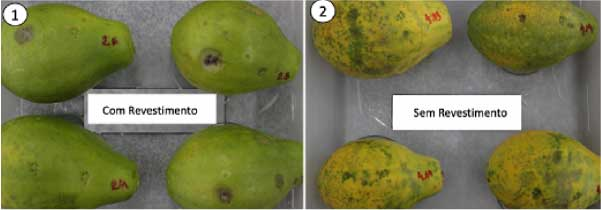 Fruta conservada com e sem revestimento - Foto: UFC/Reprodução