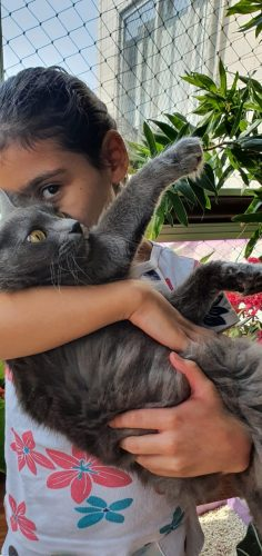 Laís ama animais - Foto: arquivo digital
