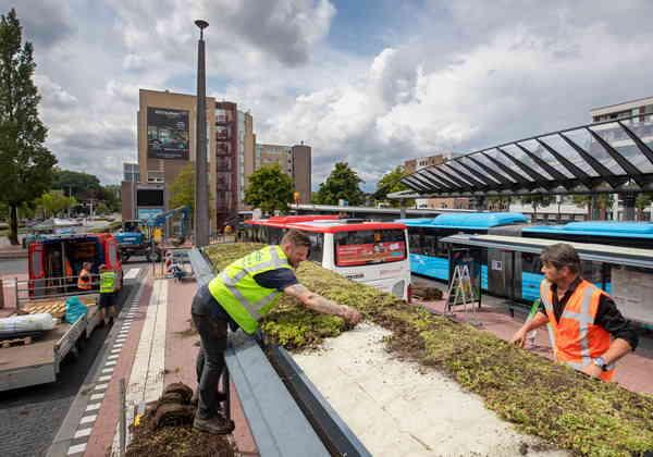 A ideia é levar os telhados verdes para outros prédios da cidade Fotos: Divulgação