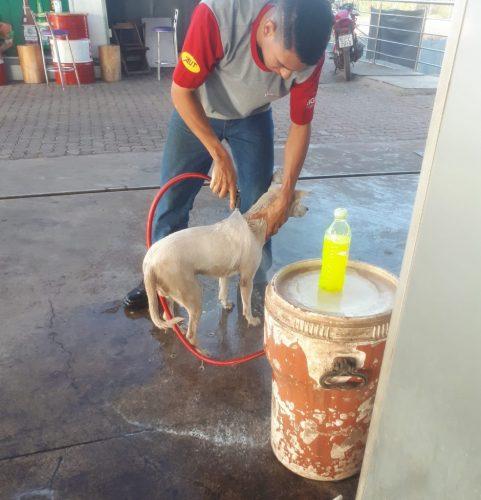 Funcionários cuidam do cão - Foto: arquivo pessoal