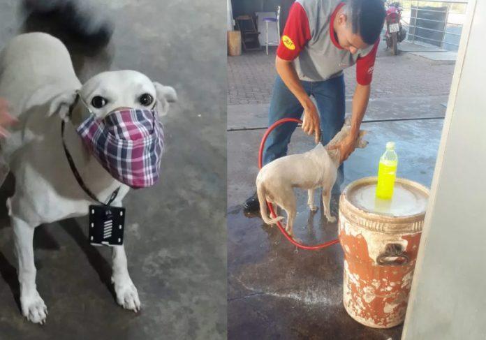 Branquinho é o cão abandonado que foi adotado por funcionários do posto no MT - Foto: arquivo pessoal