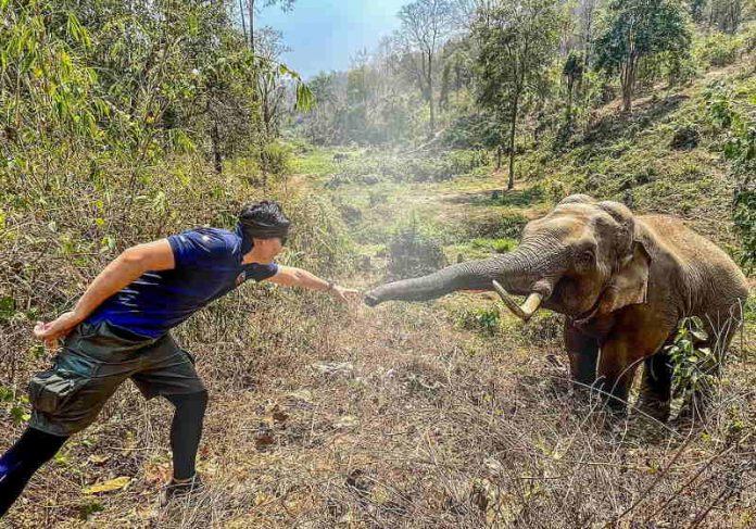 elefante selvagem reconheceu o veterinário que o tratou 12 anos atrás em um momento emocionante registrado pela câmera. Foto: Pattarapol Maneeon