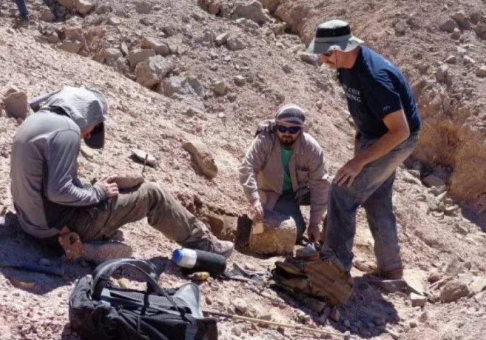 Cientistas encontram restos fósseis de pterossauro pela primeira vez no Chile - Foto: Universidad de Chile / AFP
