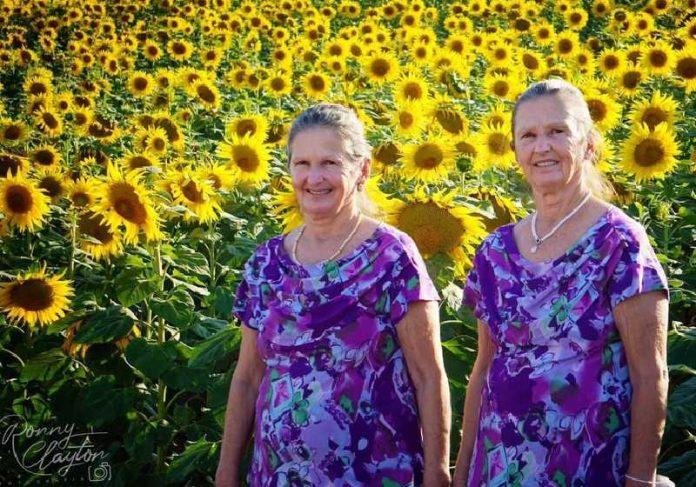 Idosas gêmeas no ensaio fotográfico na plantação de girassóis em Cerquilho - Foto: Ronny Clayton Fotografia