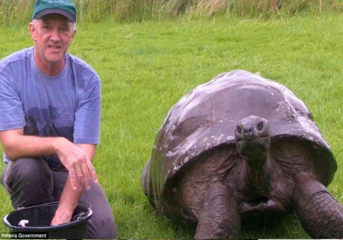 A tartaruga já viveu mais que a pessoa mais longeva registrada no mundo: a francesa Jeanne Calment de 122 anos. Foto: Sta Helena Government