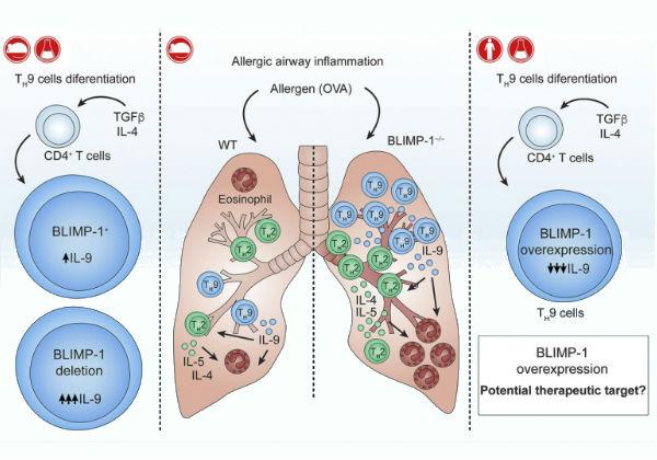 Pesquisadores brasileiros identificaram uma proteína que pode controlar doenças alérgicas e, possivelmente, doenças autoimunes e certos tipos de câncer Imagem: Luciana Benevides