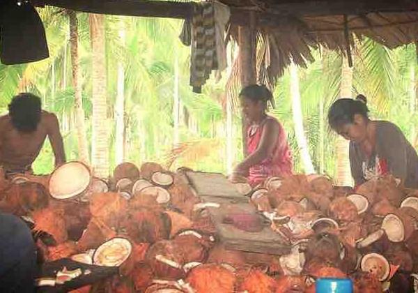 Agricultores trabalham na produção Foto: Divulgação