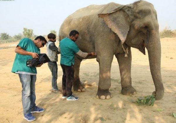 hospital_elefantes2