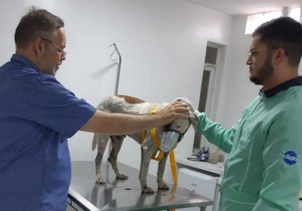 O padre no veterinário com um dos animais Foto: Padre João Paulo