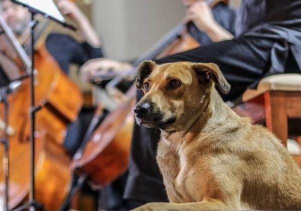 Cão quietinho na missa Foto: reprodução